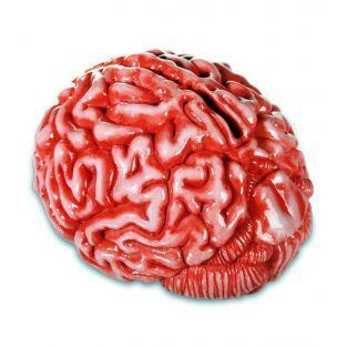 Tirelire cervelle