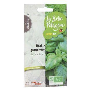Basilikum groß grün - 0,5 g