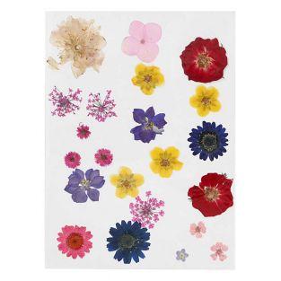 20 Flores secas y prensadas - Multicolor