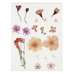 20 Flores secas y prensadas - Rosa claro