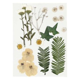 Flores secas y hojas prensadas -...