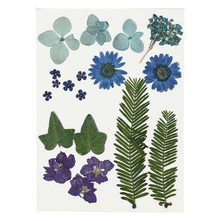 Flores secas y hojas prensadas - azul...