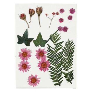 Flores secas y hojas prensadas - rojo...
