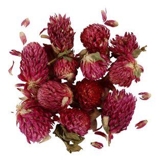 Flores secas - Trébol rojo - 15 gr
