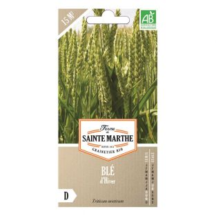 Semillas de trigo orgánico