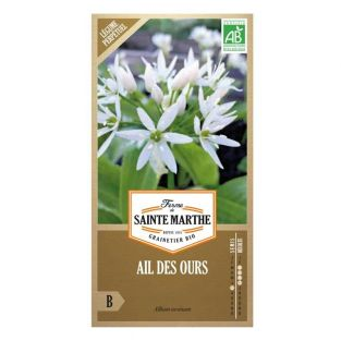 Organic wild garlic seeds