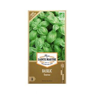 Organic Genovese basil seeds
