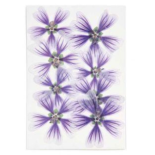 Malvas violetas secas y prensadas