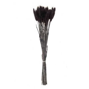 Schwarzer getrockneter Lagurus - 45 cm