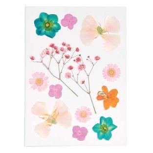 Flores secas y prensadas - Naranja y...