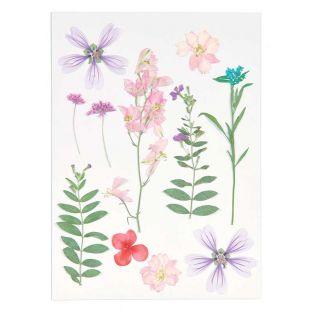Flores secas y prensadas - Morado y rosa