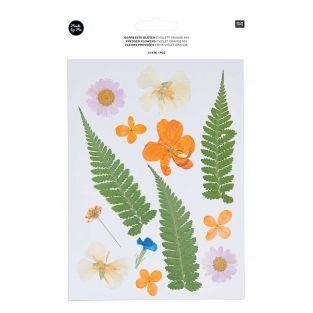 Flores secas y prensadas - Violeta y...