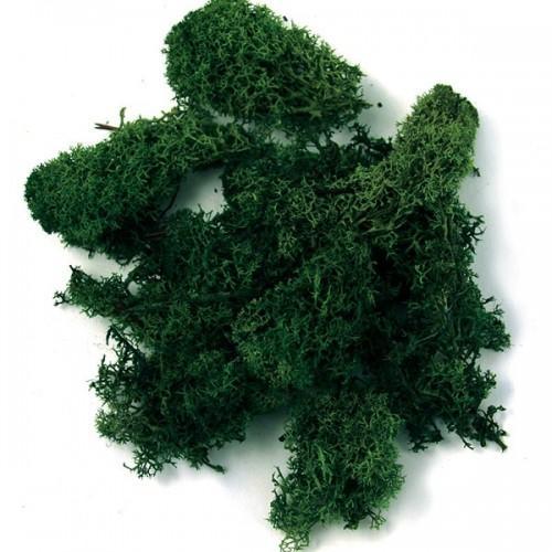Iceland moss, dark green
