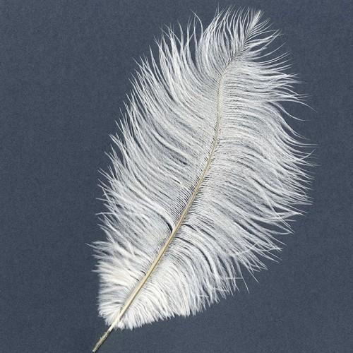 Plume d'autruche - Blanc