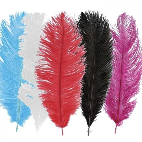 Kit de plumes d'autruches