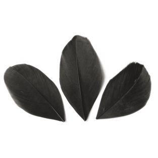 50 plumas cortadas de 60 mm - Negro