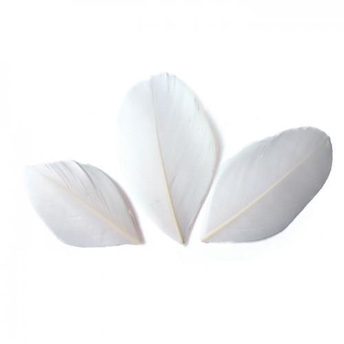 50 plumas cortadas de 60 mm - Blanco