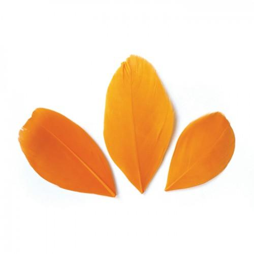 50 plumes coupées - Orange 6 cm