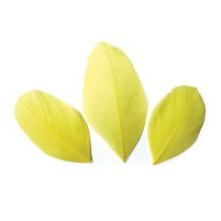 50 plumes coupées - Jaune 6 cm