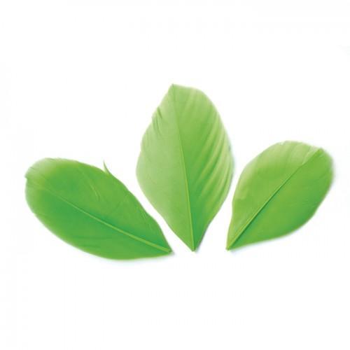 50 plumes coupées - Vert 6 cm