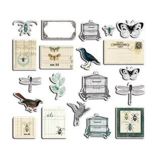20 shapes cut - Cabinet of curiosities