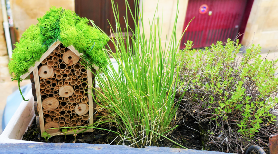 DIY: Insect house