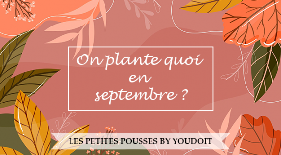 Les Petites Pousses: What are we sowing in September?